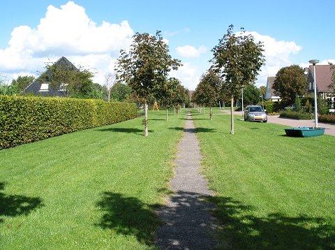 foto van een voetpad met bomenlaan