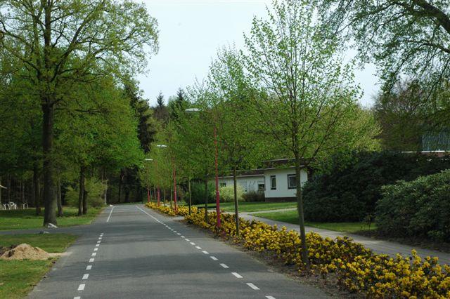 foto van weg met aan beide zijden fietsafbakening en bomen