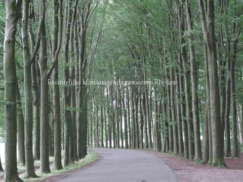 Een weg met bomen